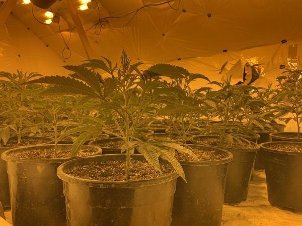 File photo of a cannabis farm.
