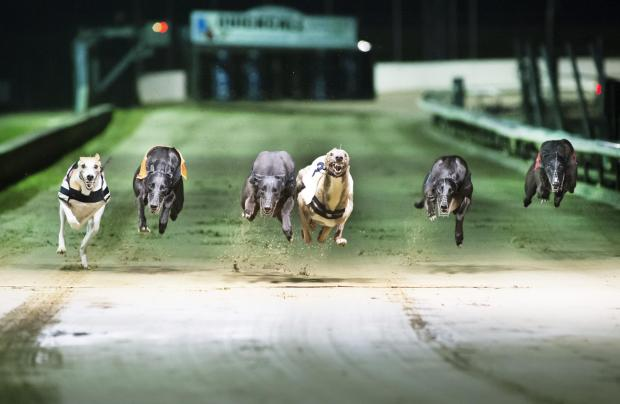 Slough Observer: Greyhounds racing with their paws on the air