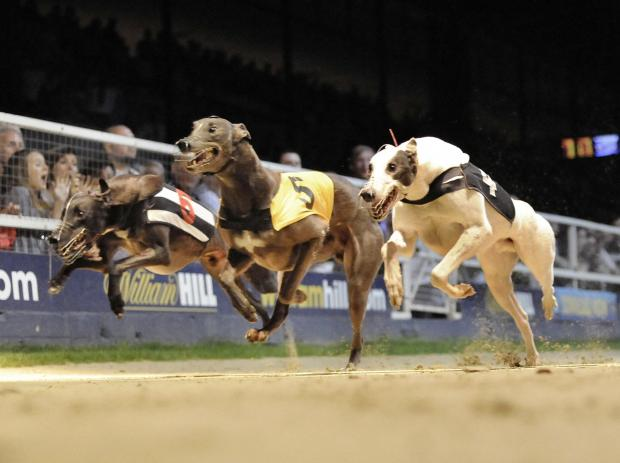 Slough Observer: Greyhounds racing