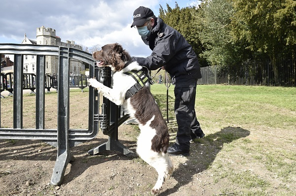 Dogs will search through bins and letter boxes. Images via Thames Valley Police