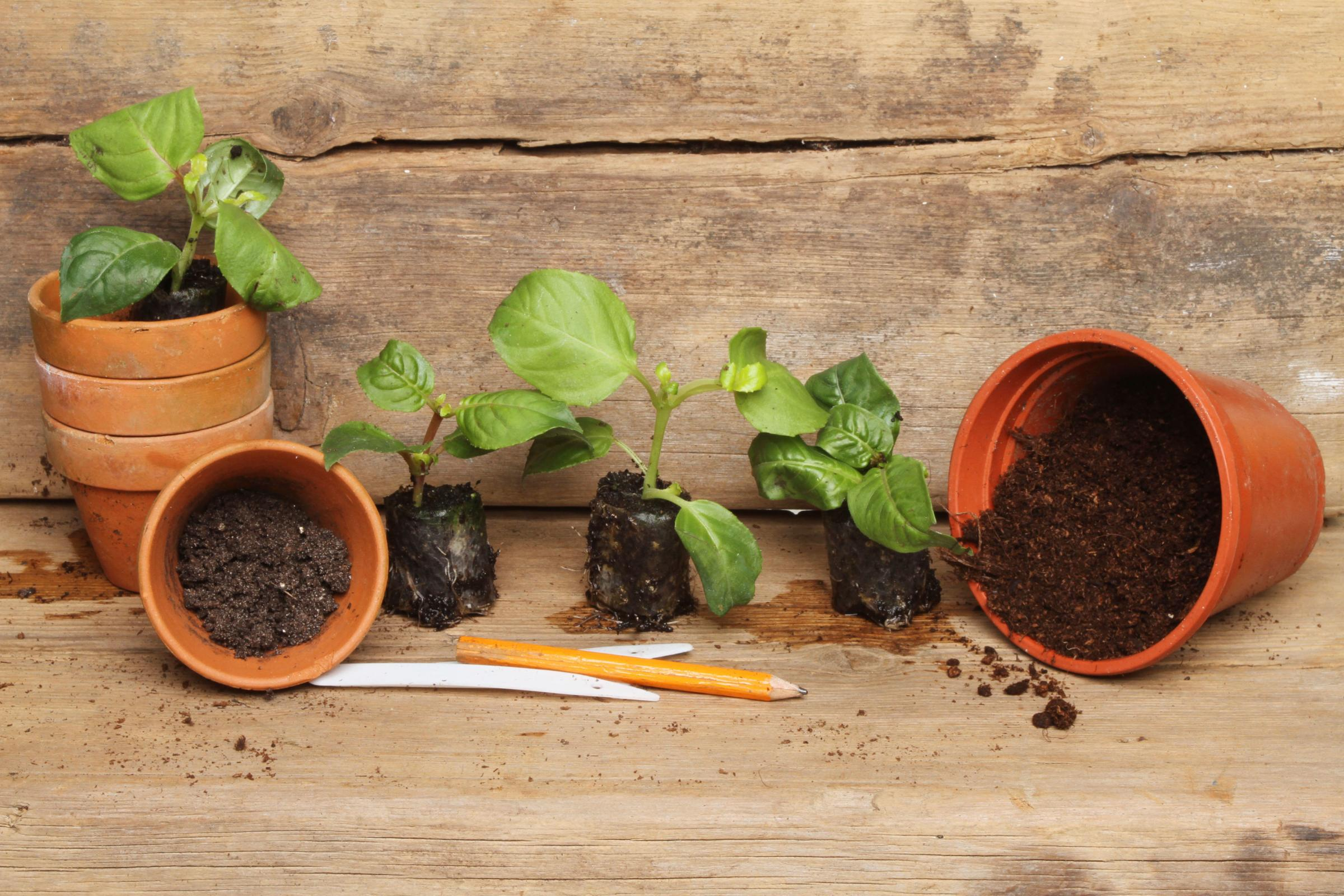 Photo of plug plants to be potted into flowerpots. Pic: Alamy/PA