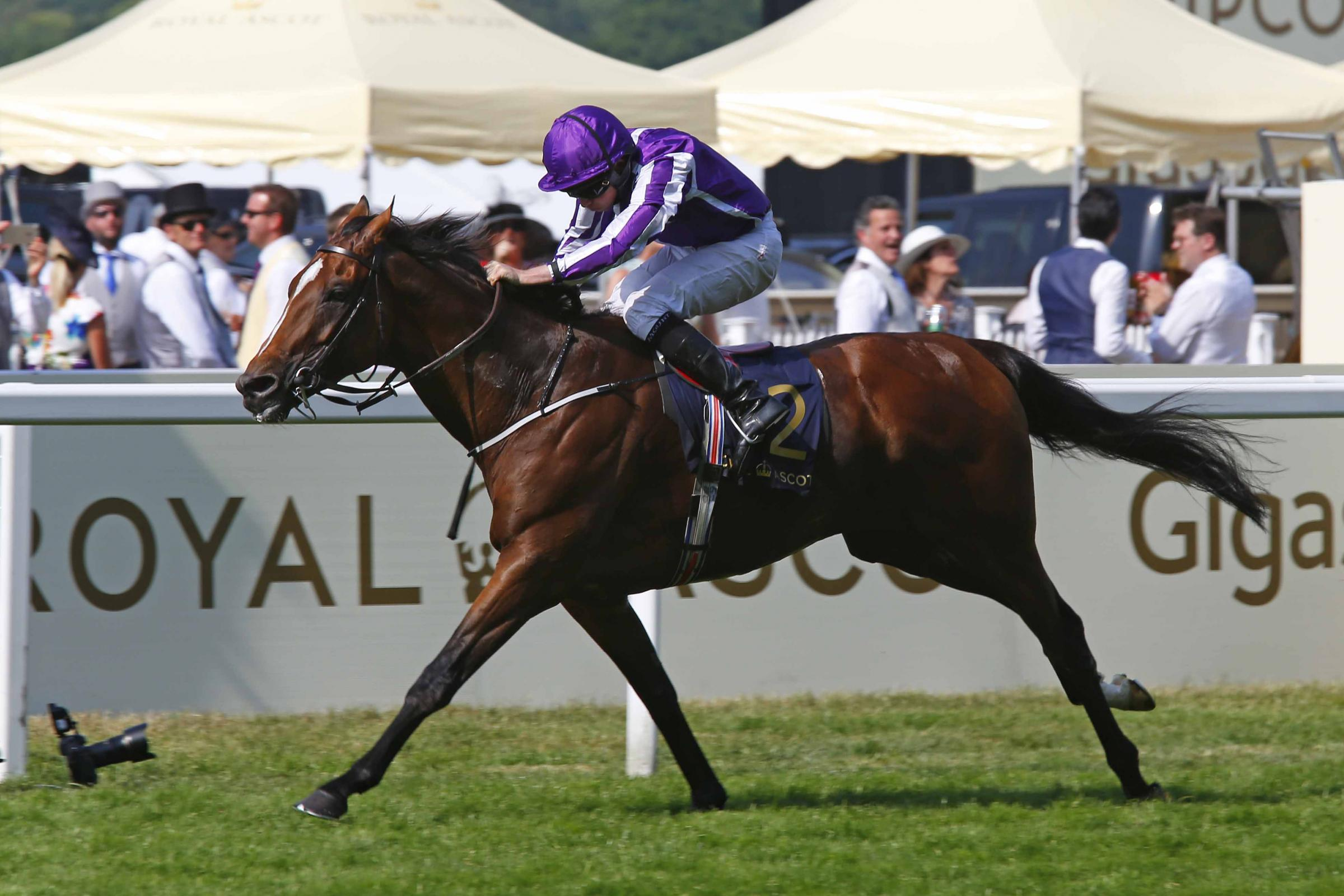 Highland Reel in action at Ascot. Picture: Sue Orpwood.