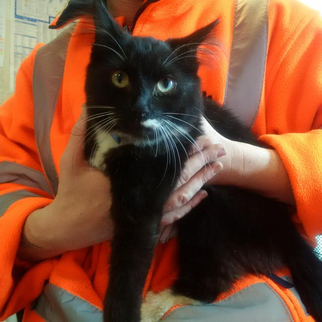 Tux was found at Chalvey